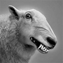 wolf_schafspelz