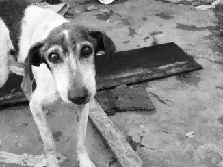 dog-1533715_960_720