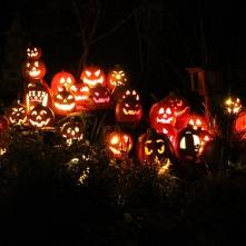 pumpkins-1586516_960_720