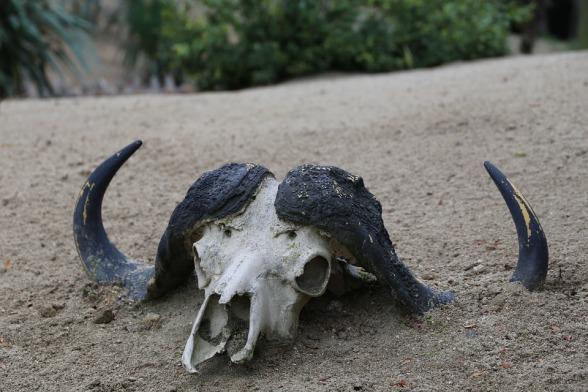 skeleton-2820548_960_720