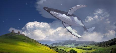 Walfang verboten