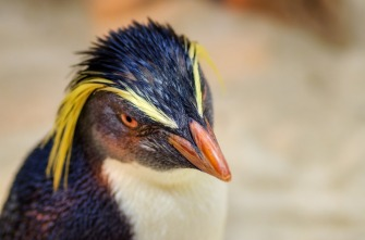 Pinguin mit Durchblick