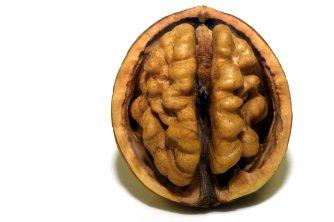 Gehirn-Brägen